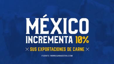 Photo of Más del 10% se ha incrementado las exportaciones de carne de res. El cierre de …